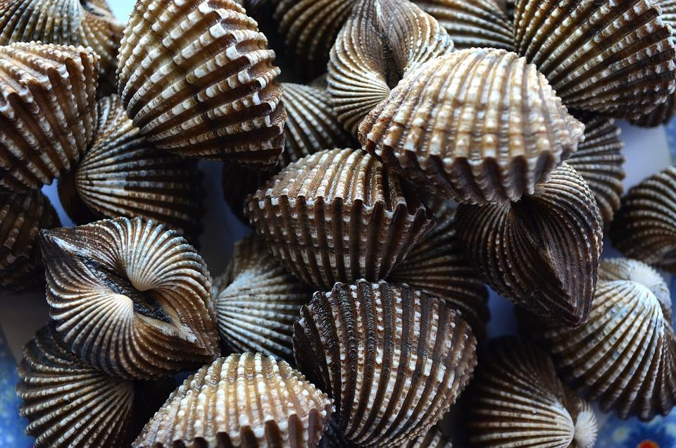 Foto Gratis Conchiglie Capesante Mollusco Immagine