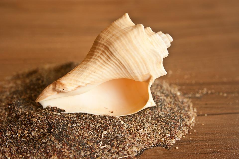Caracol Shell Concha De Mar Foto Gratis En Pixabay - Fotos-de-conchas-de-mar
