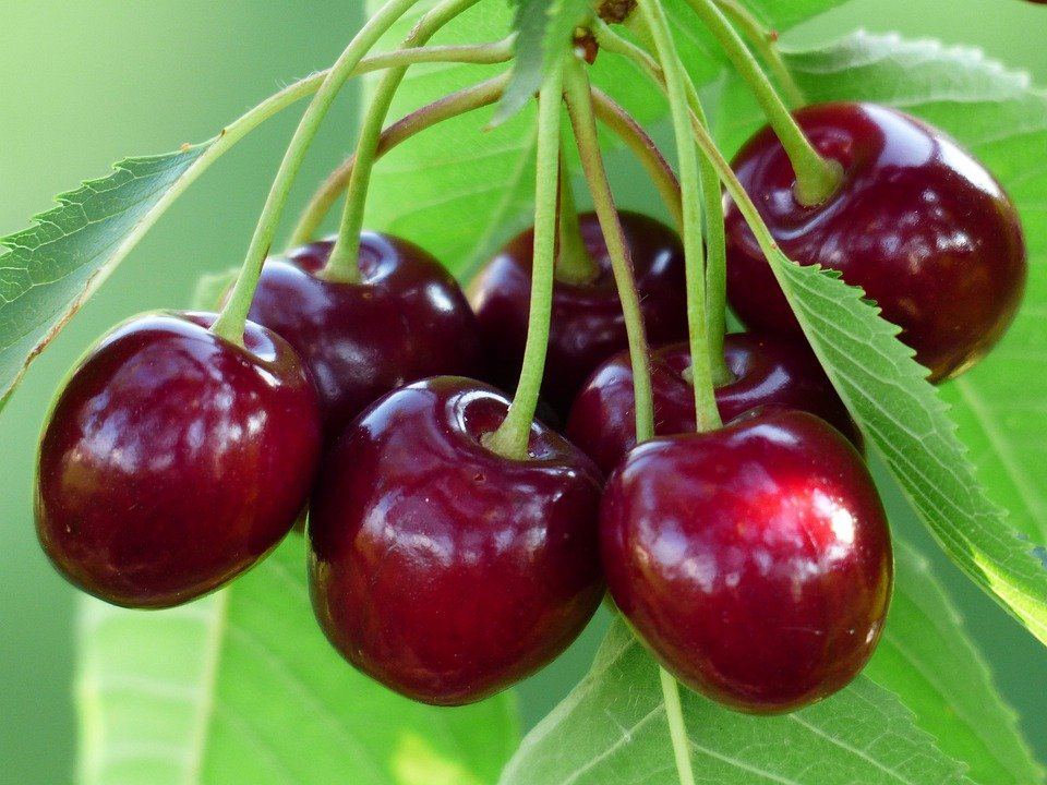 Cereza, Cereza Dulce, Rojo, Frutas, Saludable, Hojas