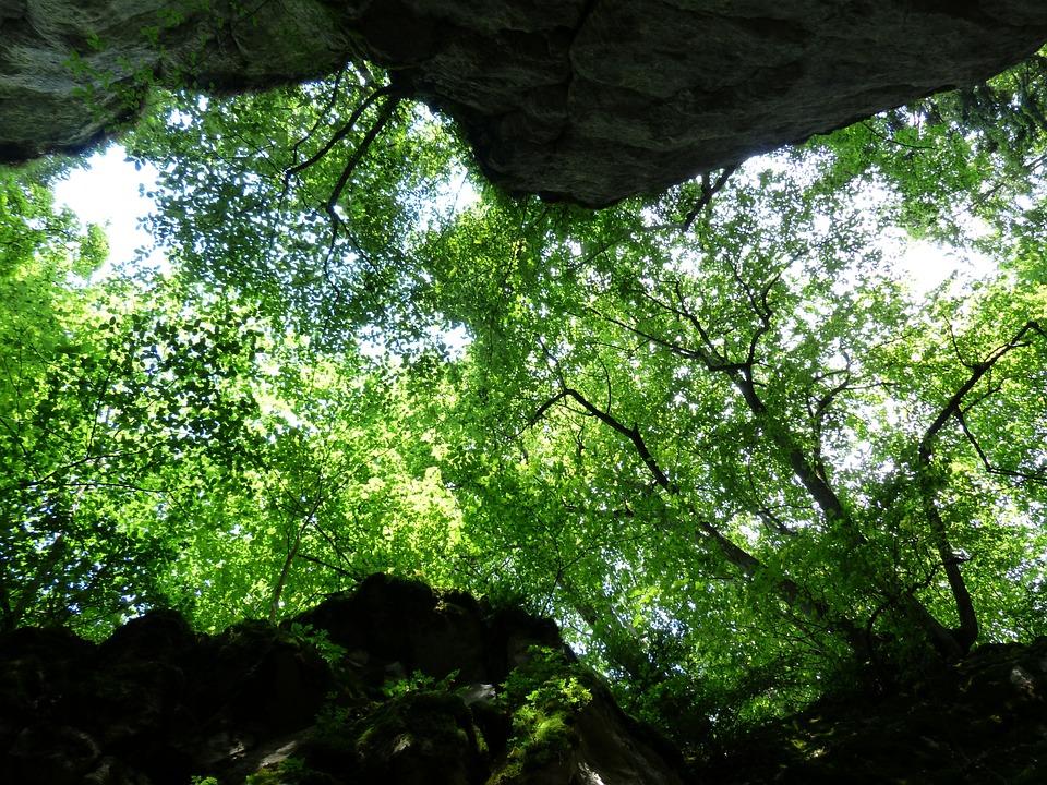 Canopy Trees Green Foliage Upward Rock Cleft Rock & Free photo: Canopy Trees Green Foliage - Free Image on Pixabay ...