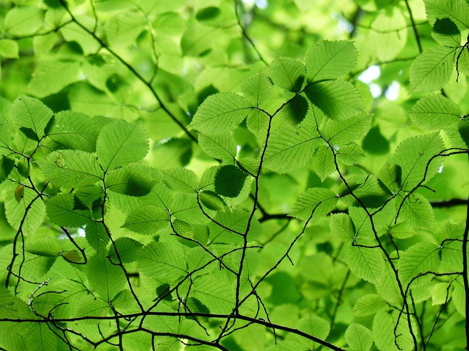 Foglie, Baldacchino, Verde, Colore, Sfumature Di Verde