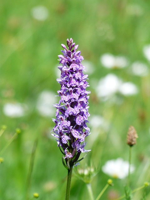 white spotted orchid flower - photo #27