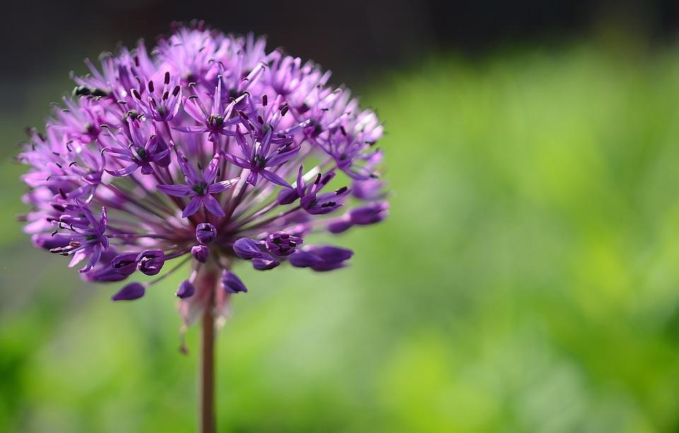 Garten blumen lila neuesten design kollektionen f r die familien - Lila blumen bestimmen ...