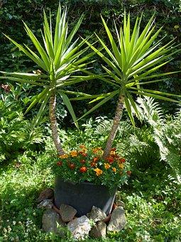 Yucca Gigantea Yucca Elephantipes Giant Yu