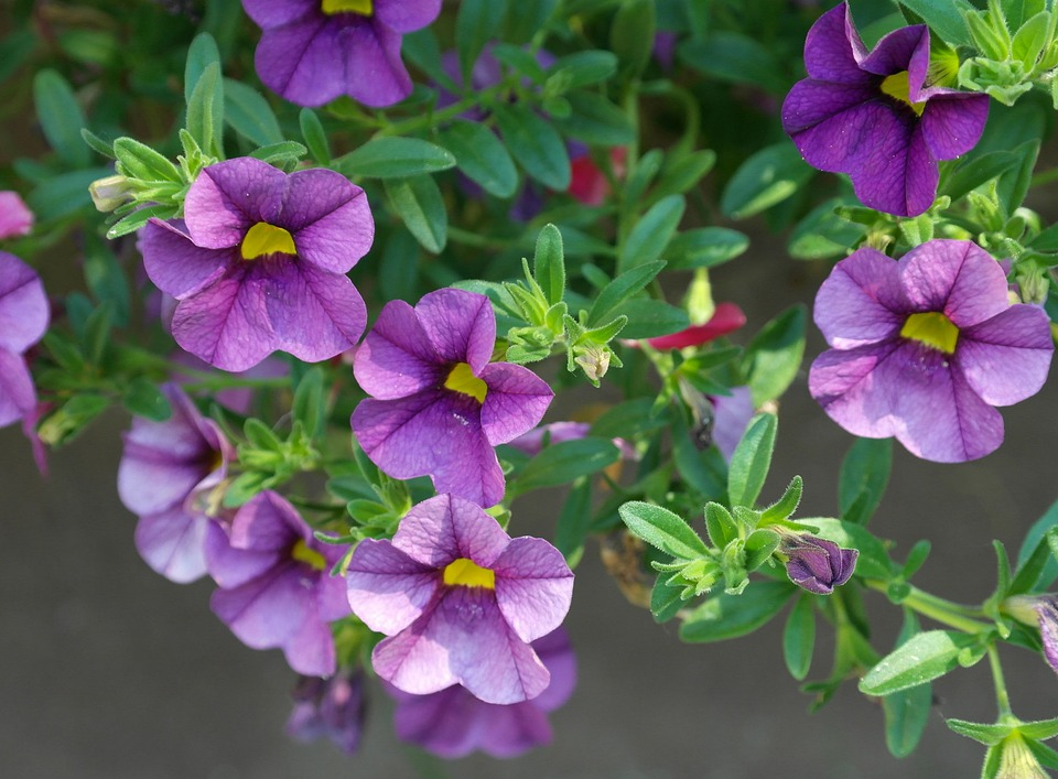 Purple and pink spring flowers