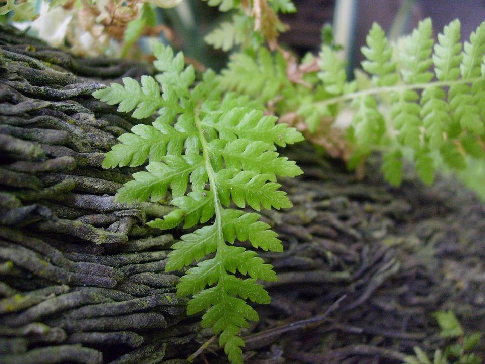 Foto gratis helechos hojas corteza rboles imagen for Tipos de arboles y caracteristicas