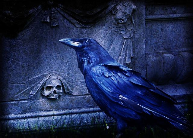 Composing Raven Dark 183 Free Photo On Pixabay