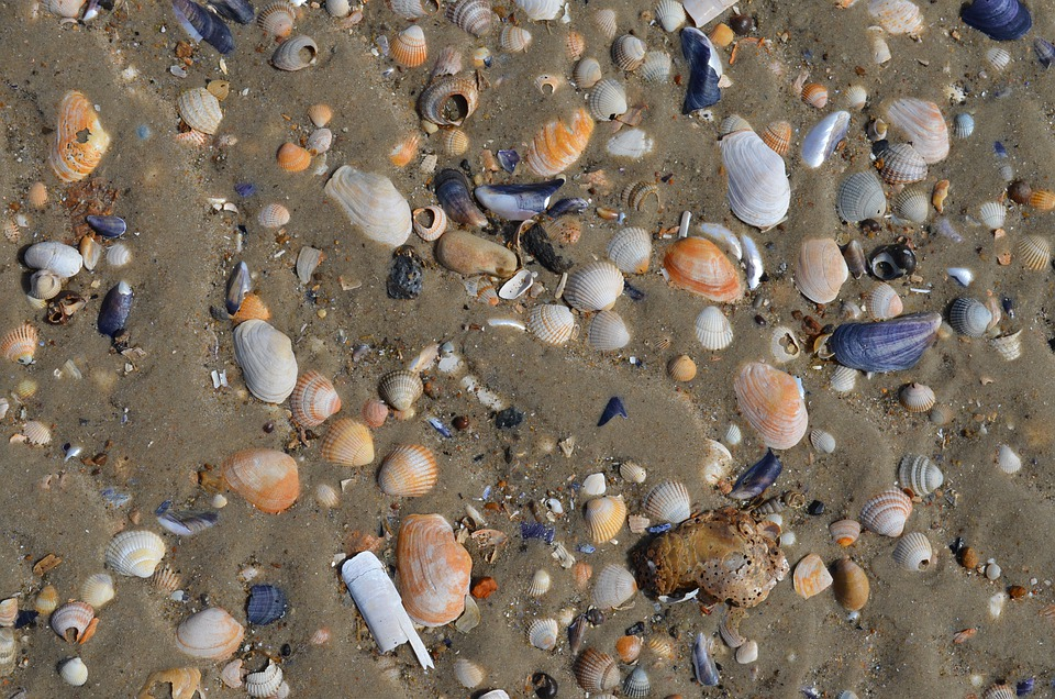 Free photo Sea Shells Beach Sand Water Free Image on