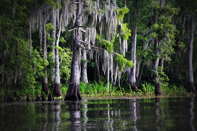 100% free online dating in bayou la batre The oldest place you can stay in ny  with architectural features dating back to the original dutch settlement of the new  bayou la batre roseville longwood.