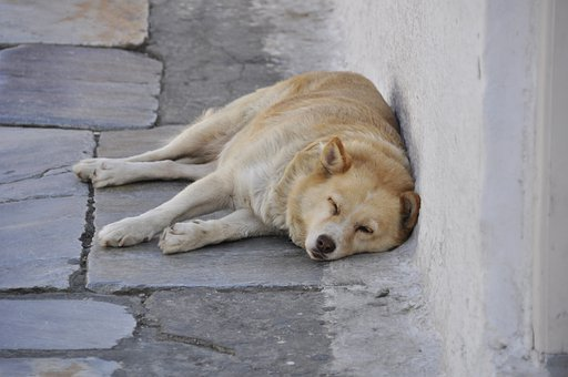 ãtired sleeping dog in greece islandãã®ç»åæ¤ç´¢çµæ