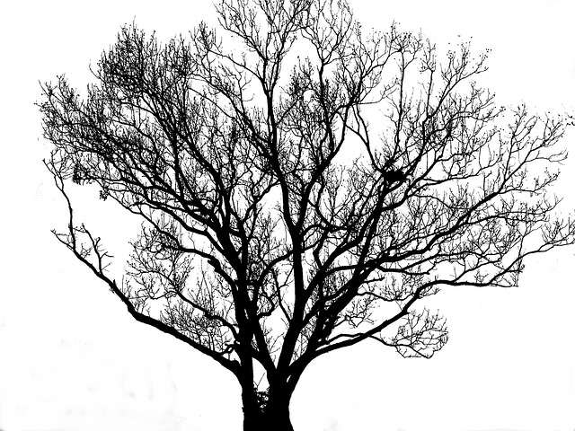tree silhouette black free photo on pixabay. Black Bedroom Furniture Sets. Home Design Ideas