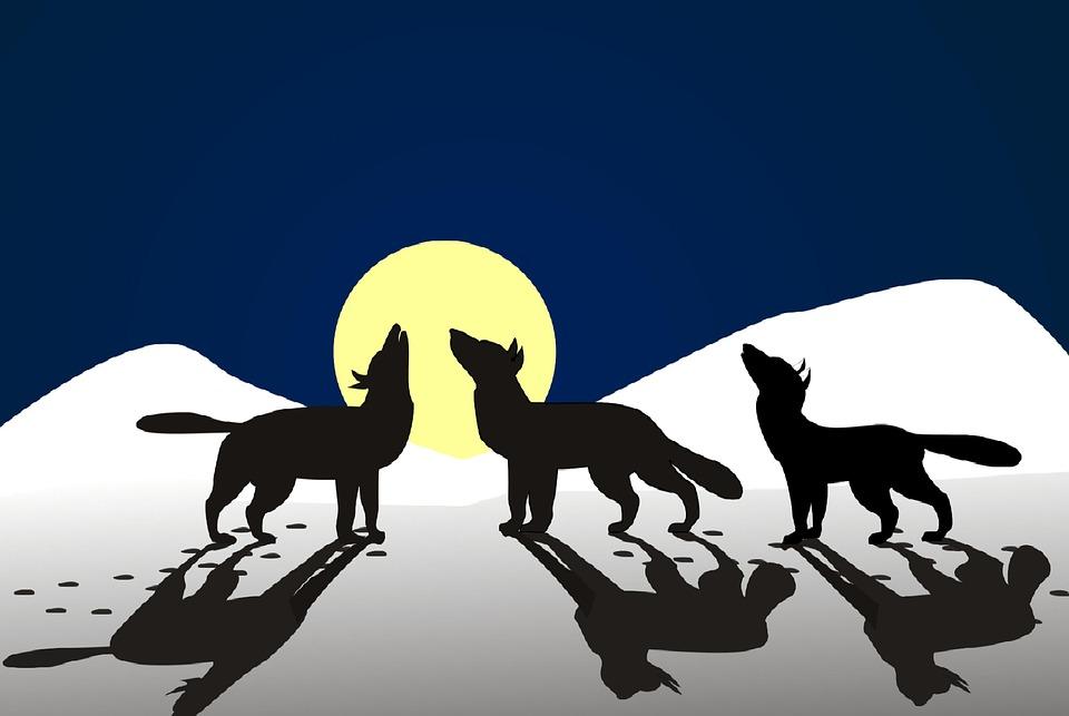 Vlci Vyt Zimni Obrazek Zdarma Na Pixabay