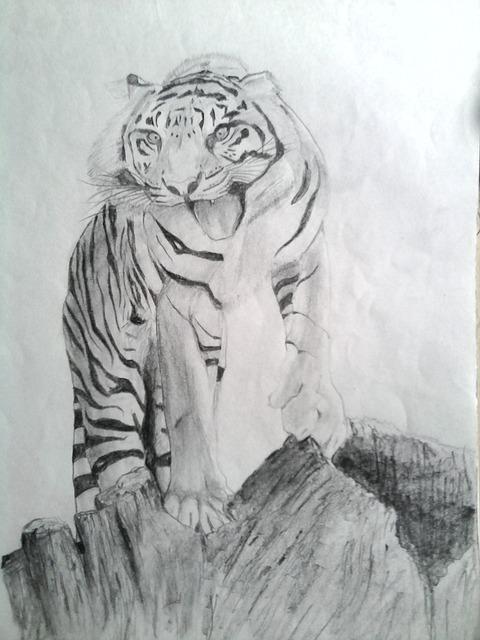 kostenloses foto tiger zeichnen bleistift kostenloses bild auf pixabay 169444. Black Bedroom Furniture Sets. Home Design Ideas