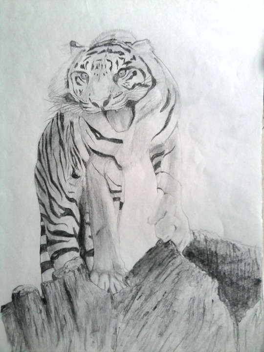 Tiger Draw Pencil Free Photo On Pixabay