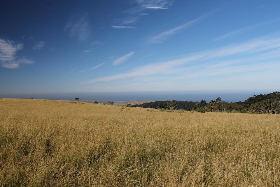Grasslands Grasses Meadows · Free photo on Pixabay