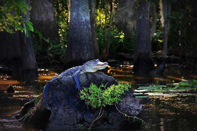 Alligator Gator Louisiana · Free photo on Pixabay