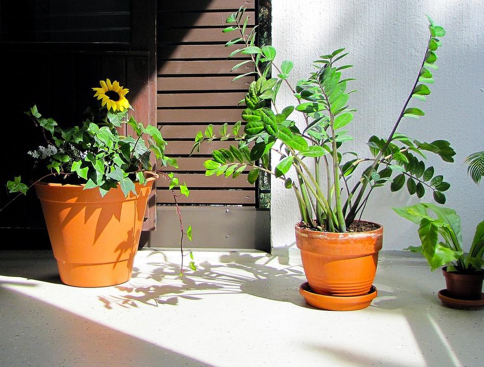 Plants, Balcony Plants, Plants On The Balcony, Balcony