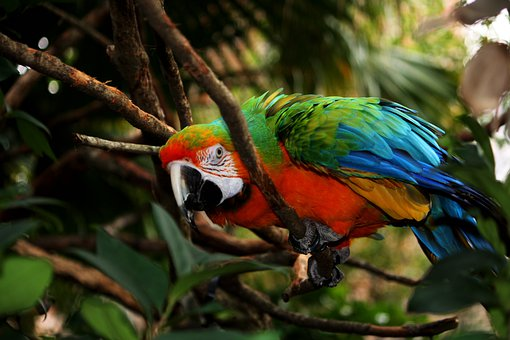 Parrot, Macaw, Feathers, Bird, Fly