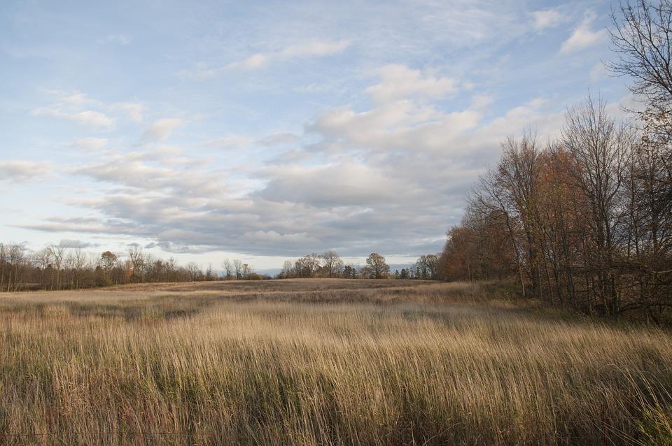 tall grass field sunset. Field Grass Tall Sky Blue Clouds Cloudy Sunset E