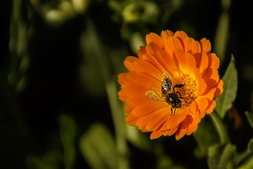 Bee, Flower, Spring, Macro, Nature