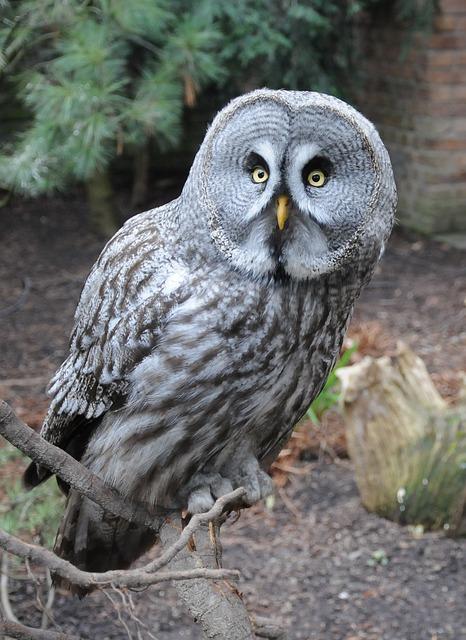 Barn Owl White Paint Color