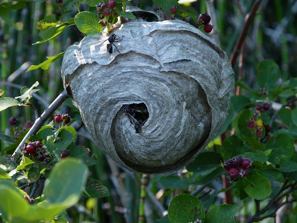 black wasp hanging free photo on pixabay