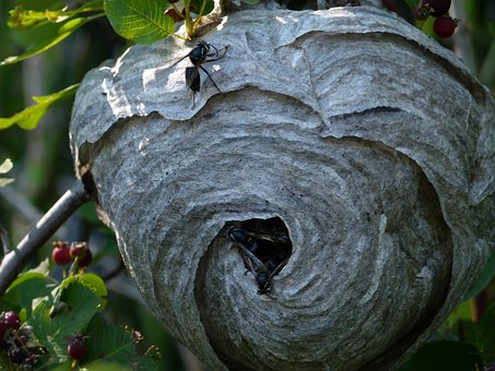insect nest free images on pixabay. Black Bedroom Furniture Sets. Home Design Ideas