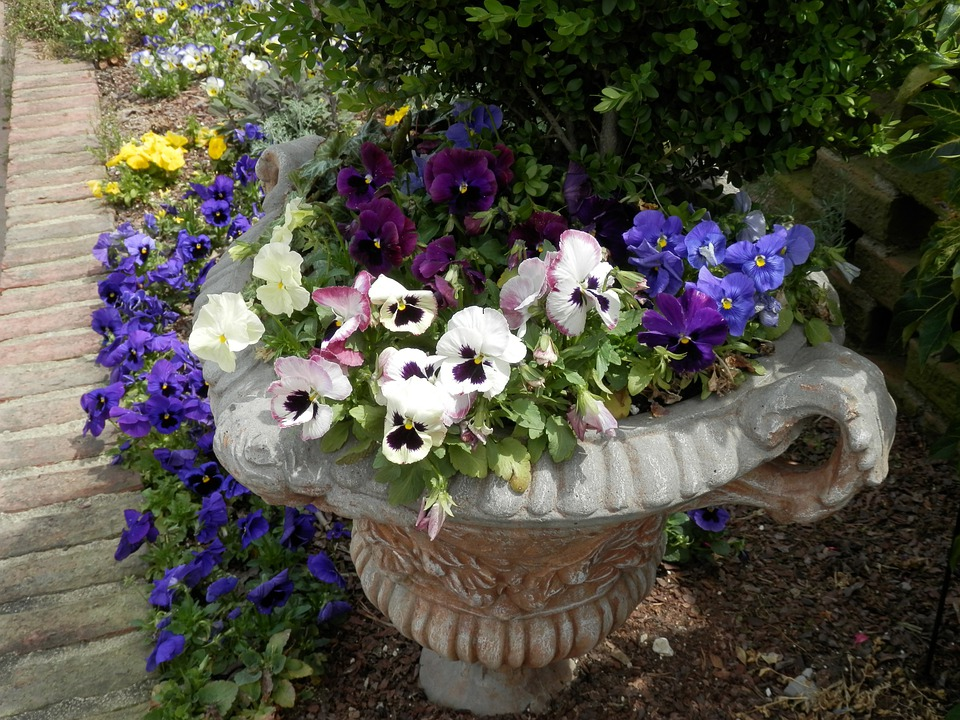 Colorful Potted Plants Outdoor