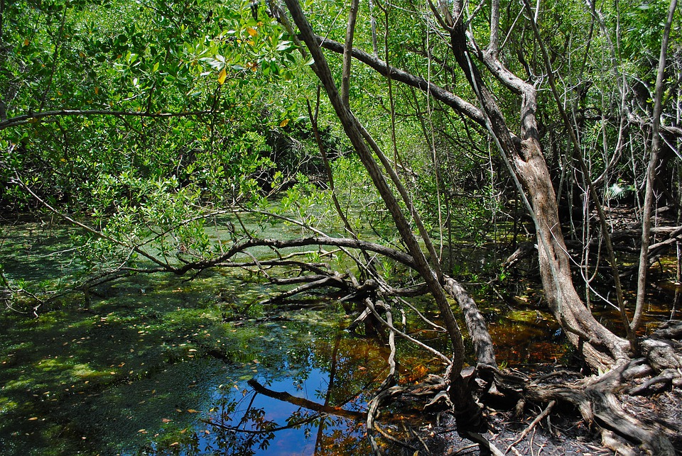 Free photo marathon florida keys crane point free image on marathon florida keys crane point nature center sciox Images