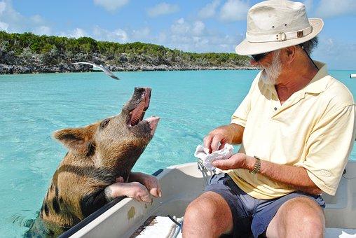 Staniel Cay Exumas Bahamas Swimming Pig Ba