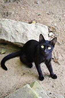Černá kočička sex obrázky