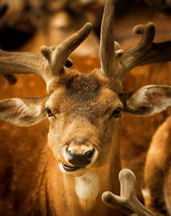 animal free images on pixabay