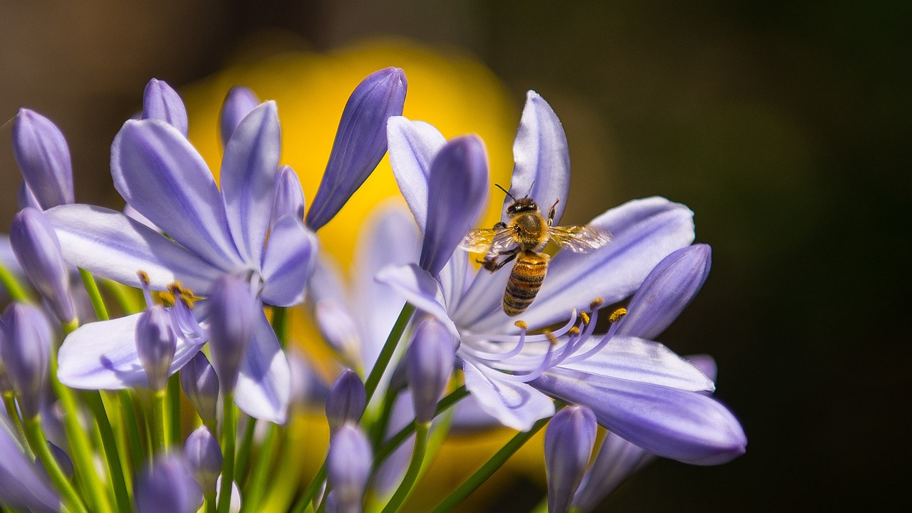 Bee-friendly bulbs
