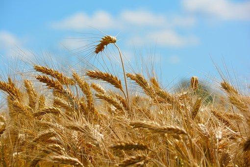 COFCO создаст экспортный центр в Новосибирске для поставки российской сельхозпродукции в КНР