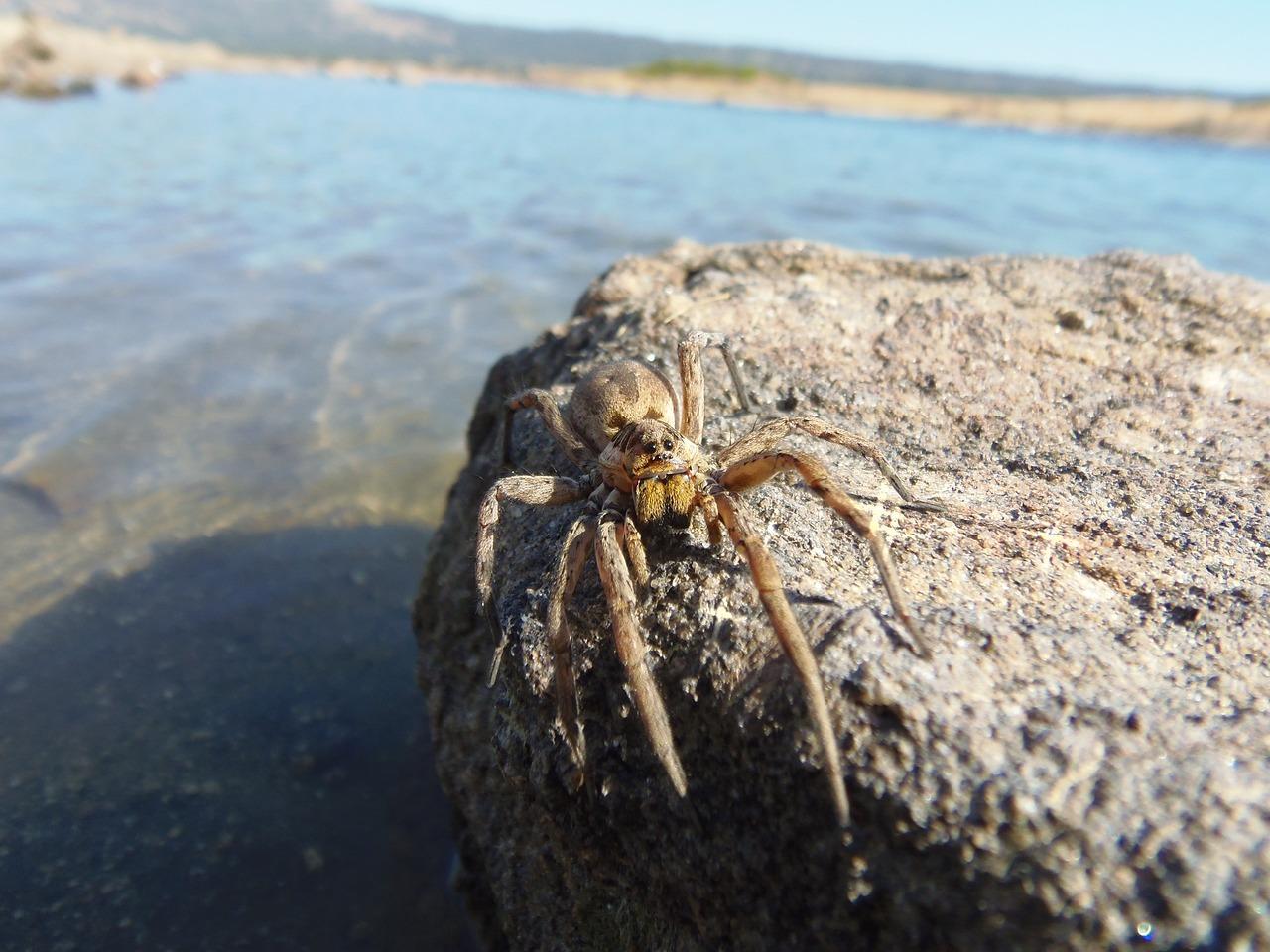 тарантулы крыма фото изменить размер маски