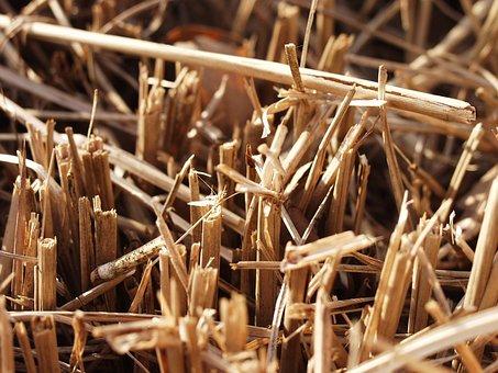 В Белгородской области засуха снизила качество и урожайность зерновых, в частности ячменя