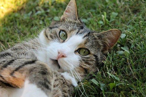 mačička veľký zadok videá