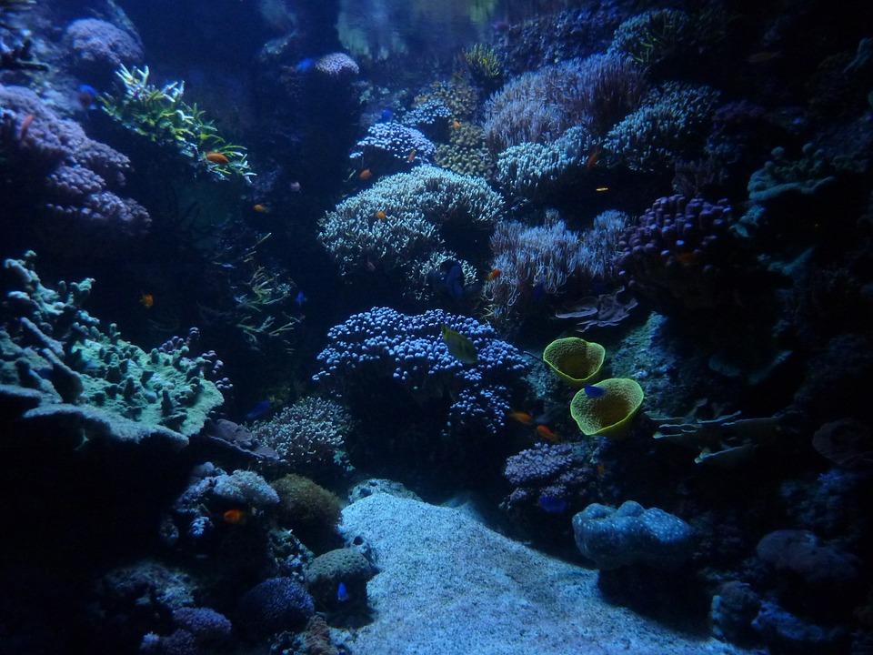 Photo gratuite aquarium fond marin calme image for Fond aquarium