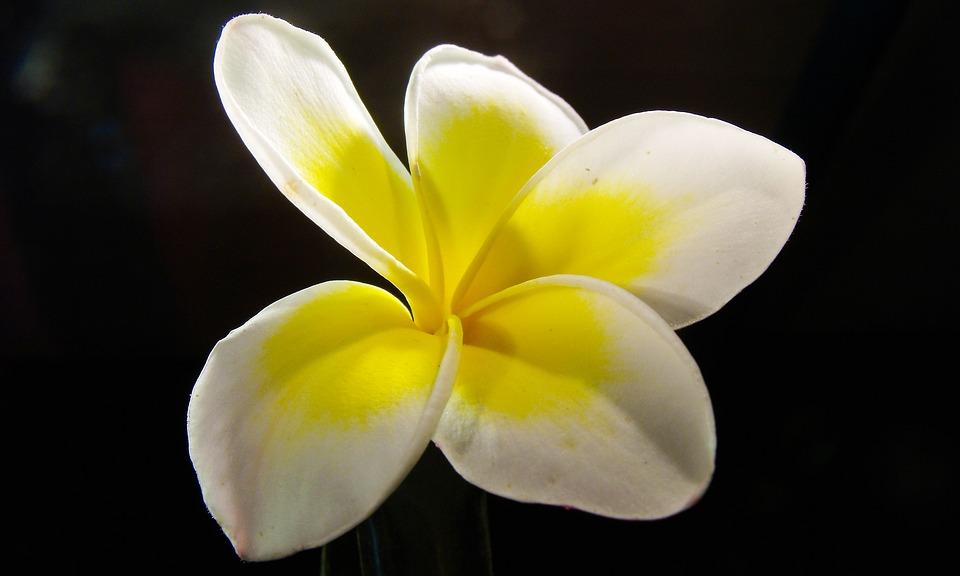 exotic, flower  free images on pixabay, Natural flower