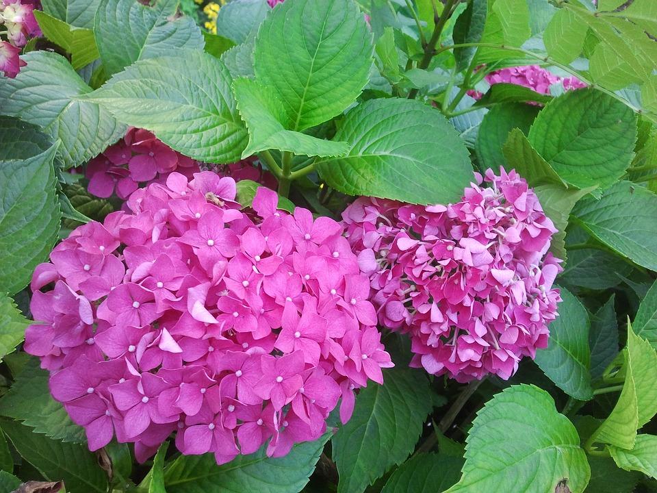Super Blume Sommer Natur - Kostenloses Foto auf Pixabay @JY_87