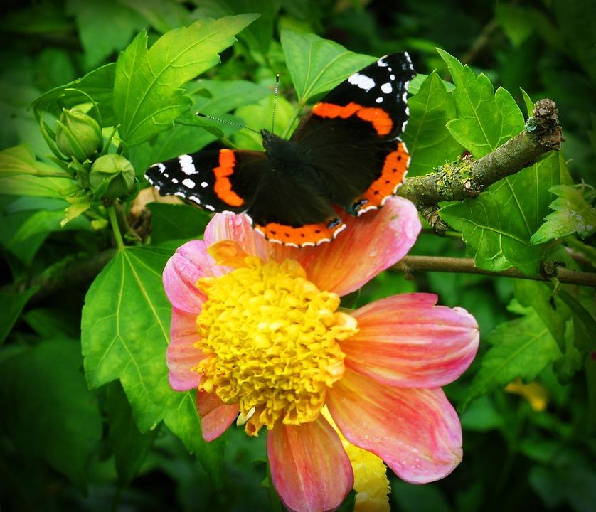 Fleur papillon fleurs photo gratuite sur pixabay - Papillon fleur ...