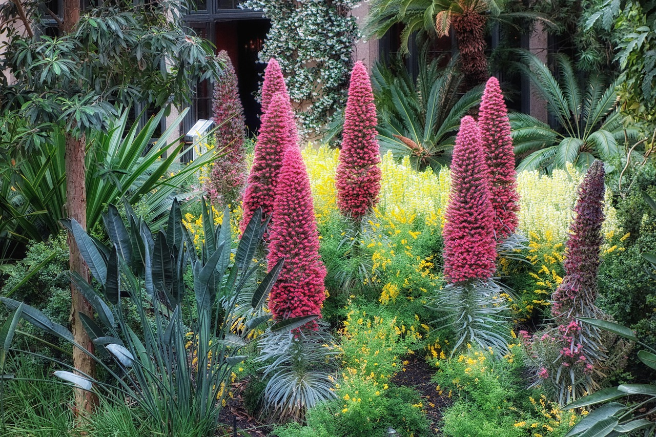 крупным растения сочинского дендрария фото с названиями время времени появляются