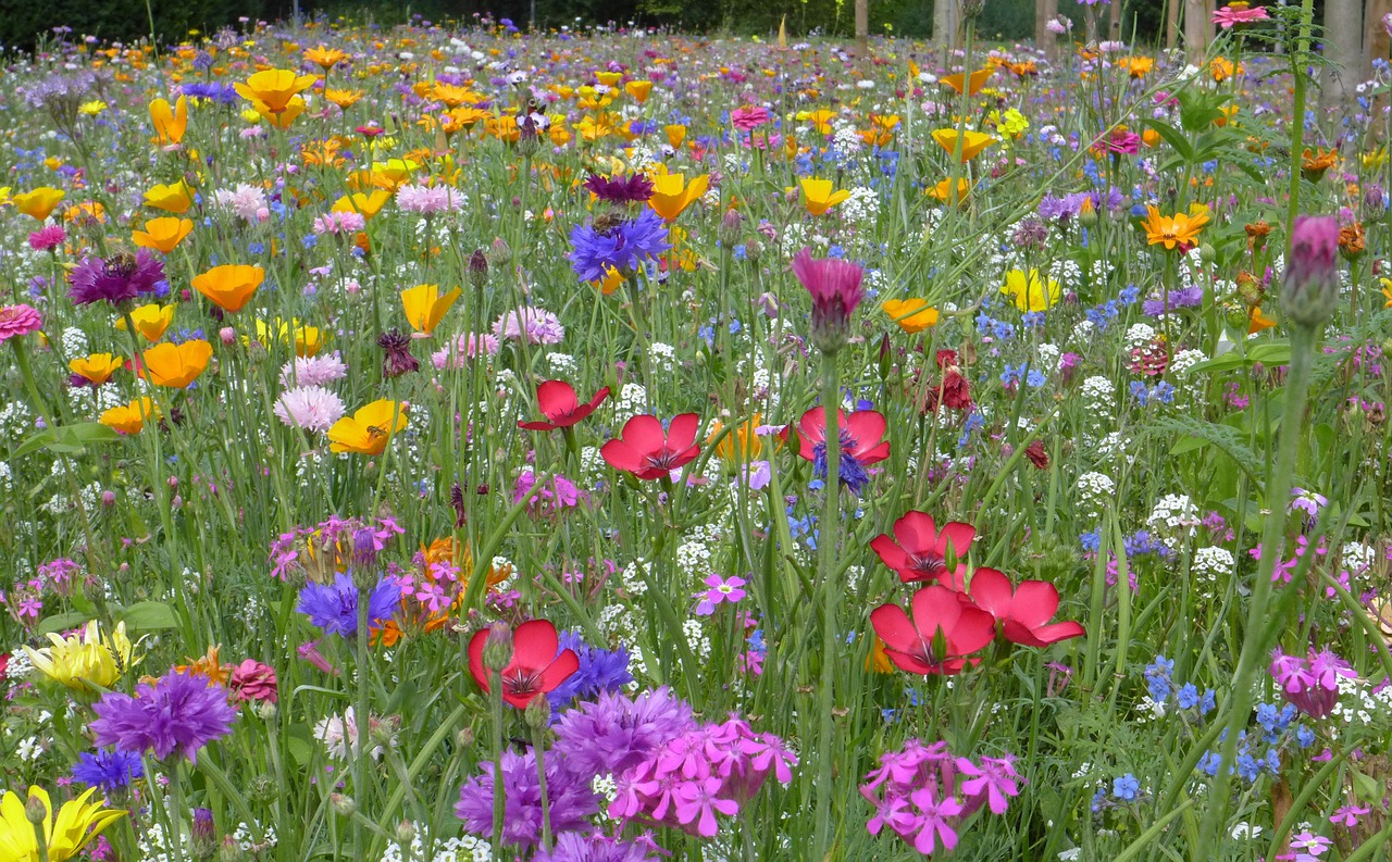 Решил, картинки цветов садовых и полевых