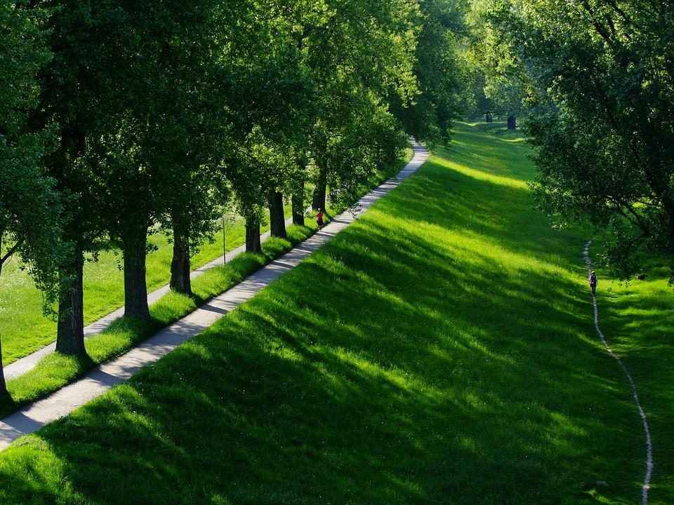 Foto gratis paisaje rboles hilera de rboles imagen for Papel de pared paisajes