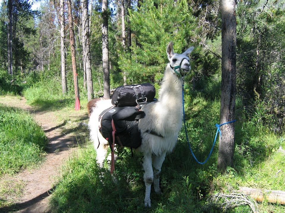 Llama Pack Idaho Trail 183 Free Photo On Pixabay