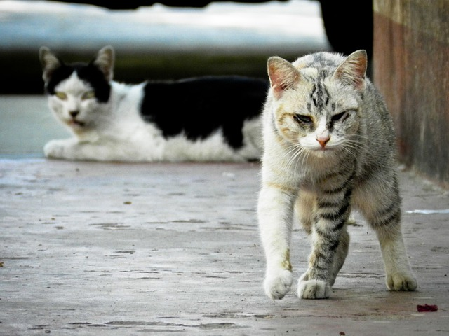 The Stray Cats On Sunset