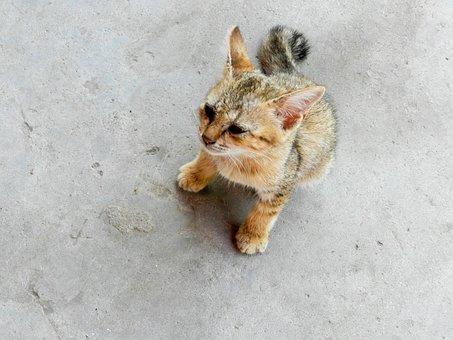 赤ちゃん, 野良猫, 猫, ネコ, ホームレス, 毛皮, 子猫, 動物