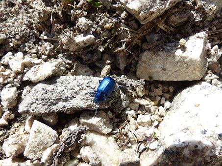Escarabajo, Azul, Glaseado Incluye