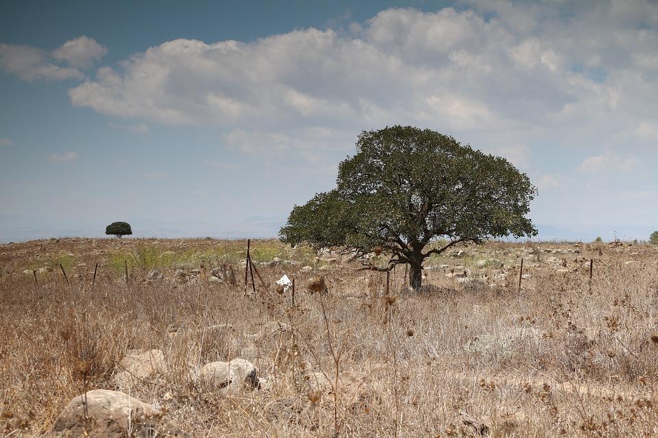 フィールドとツリー, ゴラン高原, イスラエル,... 無料の写真: フィールドとツリー, ゴラ