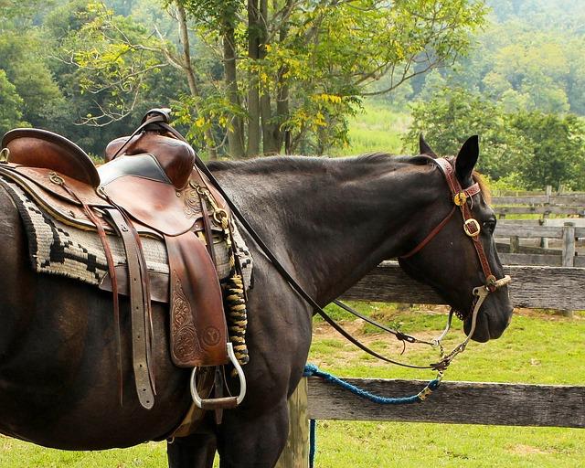Free photo horse western saddle pomel horn free for Sillas para caballos